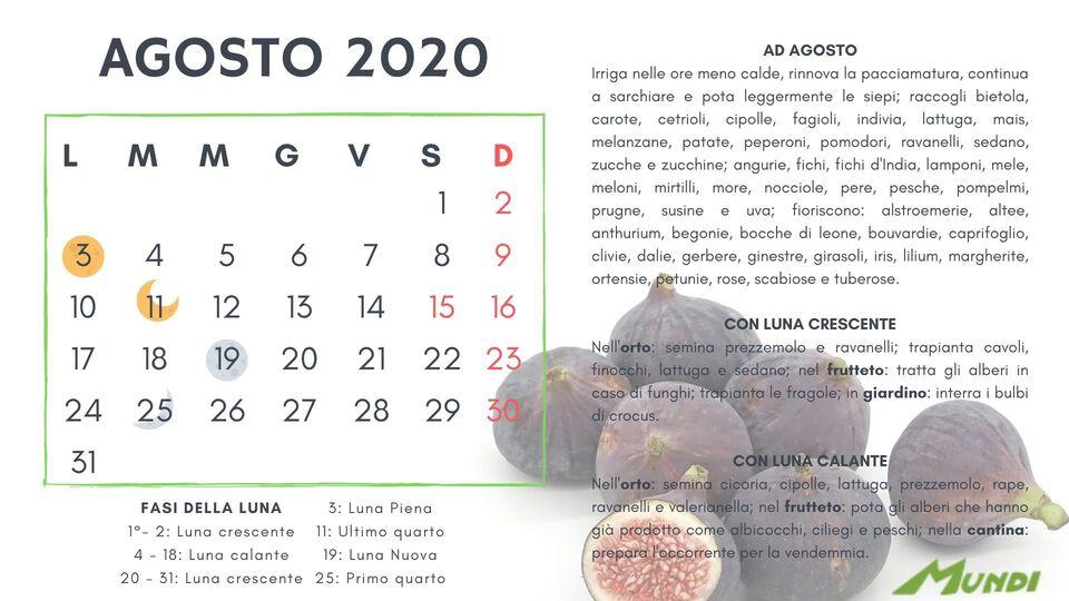 Calendario Cipolle 2019.Calendario Lunare 2019